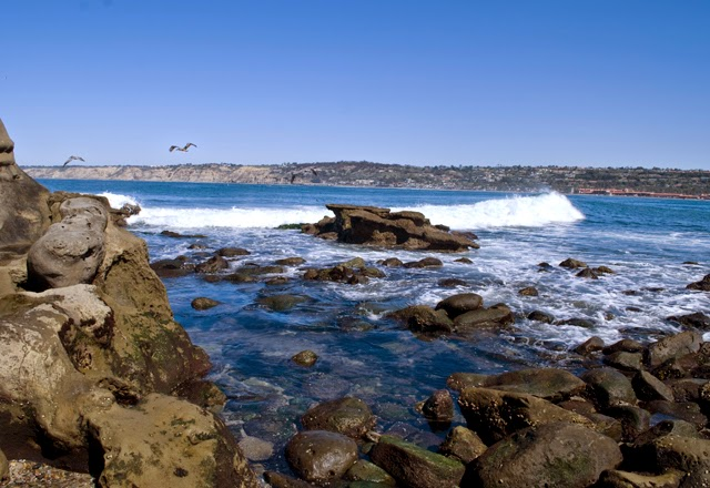 A Brief San Diego Visitor's Guide // Visiting the cliffs of La Jolla